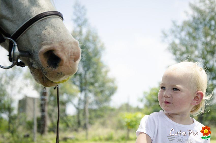 Horse styled kiddies shoot